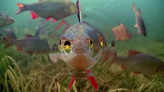 Download Underwater world of Ireland in HD. Video