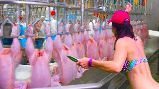 Download Modern Technologies Vs Primitive - How It's Made - Amazing Chicken Meat Processing Poultry Factory Video