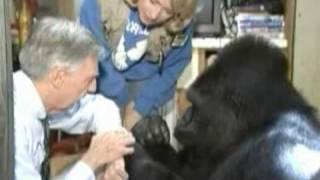 Download Koko meets Mr. Rogers, her favorite celebrity Video