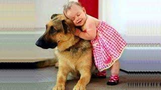 Download 「아기와 개」무슨 짓을해도 화 내지 셰퍼드 강아지 너무 친절! Video