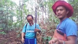 Download Menangkap cucak ijo borneo part 1 Video