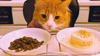 Download Store Cat Food vs Homemade Video
