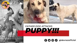 Download Father dog attacks puppy and leaves him with broken ribs internal bleeding damaged organs @dev naz Video
