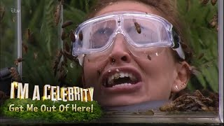 Download Ferne, Spencer and Vicky Face Terrifying Bushtucker Trial | I'm A Celebrity... Get Me Out Of Here! Video