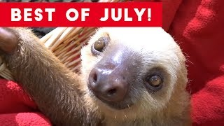 Download Funniest Pet Reactions & Bloopers of July 2017 | Funny Pet Videos Video