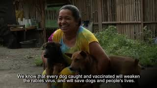 Download Capture and Handling of Dogs for Mass Dog Vaccination - The Bali Method Part 1: Roaming Dogs Video