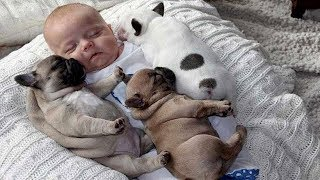 Download 「絶対笑う」一緒に成長する犬と赤ちゃん。面白くて超かわいい! Video