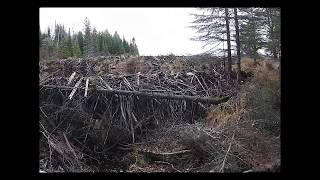 Download Beaver Dam Collapse Update 2018 Video
