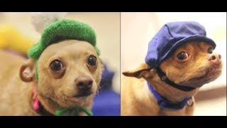 Download Adorable bonded pups looking for forever home together | The Dodo Project Home Live Video