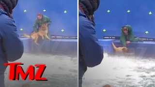 Download A DOG'S PURPOSE' TERRIFIED GERMAN SHEPHERD FORCED INTO TURBULENT WATER | TMZ Video