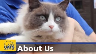 Download About Cats Protection Video