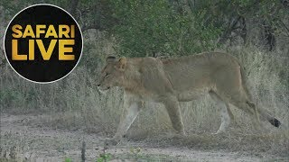 Download safariLIVE - Sunrise Safari - June 3, 2018 Video