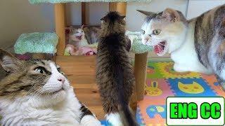 Download 史上最強のボス猫もゴッド姉ちゃんには敵わない【Eng CC】 Video