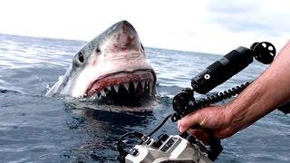 Download 10 Craziest Videos Caught on GoPro Video