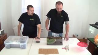 Download Basic Tarantula Housing/care Video