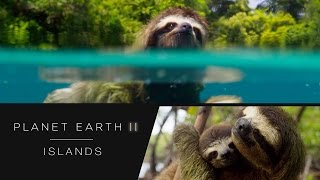 Download Swimming sloth - Planet Earth II: Islands Preview - BBC One Video