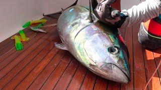 Download TUNA! Catch, Clean, Cook and EAT!!!! Gabriella's Quepos, Costa Rica Video
