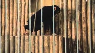 Download Safari serial 1986 - cast 1. Video
