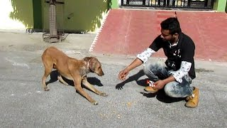 Download Rescue of a shy & wounded street dog Video