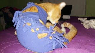 Download Tutorial💜Haz un body para gatos POST OPERATORIO!💜Fácil y rápido Video
