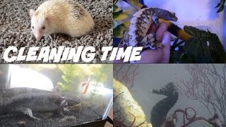 Download Cleaning All My Animal Habitats (UPDATED IN DESCRIPTION) Video