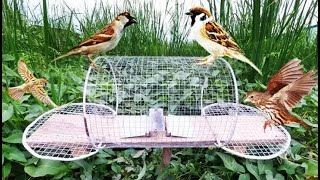 Download How to Make Electric Fan Bird Trap at Home - Amazing quick Sparrow Old bird trap Easy! 108 Video