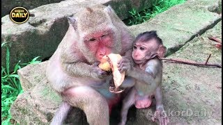 Download Why big monkey want kidnapper to Popeye baby, Angkor Daily 511 Video