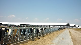 Download Jourdain leader Grand bâtiment d'élevage bovin laitier de 4800 places Video