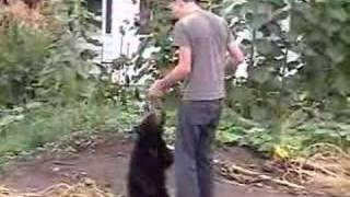 Download Wild Black Bear Cub Eating From Hand Video
