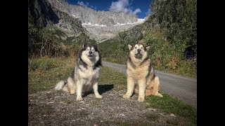 Download TRAVELLING EUROPE WITH MALAMUTES- FRANCE VLOG, CLIMBING MOUNTAINS, CABLE CARS, GLACIERS Video