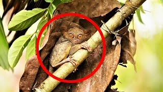 Download MOST BIZARRE Monkey Species Video