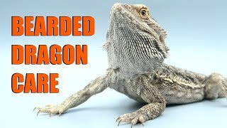 Download How To Care For Bearded Dragons 2019 | EMZOTIC Video