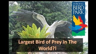 Download Kings of The Skies - Largest Bird of Prey in The World! Video