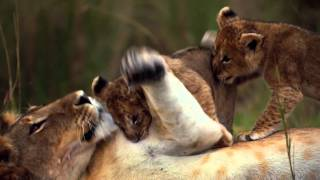 Download African Cats: Official Trailer Video