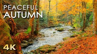 Download 4K Autumn Forest - Relaxing Nature Video & River Sounds - NO MUSIC - 1 hour Ultra HD 2160p Video