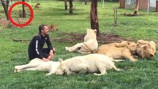 Download 【感動する話】危機一髪! ライオンと戯れる男性の背後からヒョウが襲いかかる! それを救ったのは…? Video