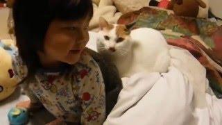 Download オッドアイの三毛猫ケイちゃん 38 こどもの背中に乗る odd eye's tortoiseshell cat of my home Video