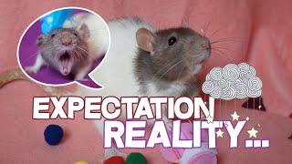Download EXPECTATION VS REALITY (Attente vs Réalité) • Vivre avec des rats ♡ Video