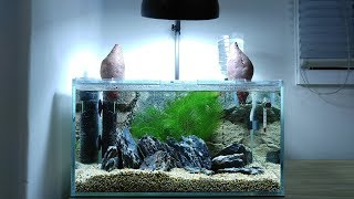 Download Sweet Potato Betta Tank SETUP - No filter, No CO2, NO ferts 4.5 Gallon Nano Aquarium Video
