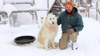 Download Our Livestock Guardian Dog and winter weather Video