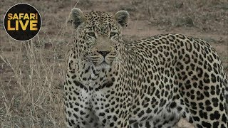 Download safariLIVE - Sunrise Safari - October 16, 2018 Video