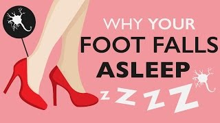 Download Why Does Your Foot Fall Asleep? Video