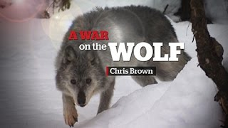 Download Wolf cull in B.C. | A War on the Wolf Video
