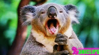 Download Funny Animal Sound ✯ Animals Making Funny Sounds and Noises Video