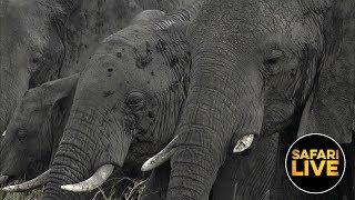 Download safariLIVE - Sunset Safari - July 17, 2019 Video
