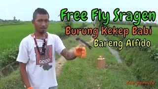 Download Free Fly Sragen Bareng Mas Edo @ Persawahan Sambirejo Video