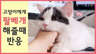 Download 고양이에게 팔베개를 해주면? 쵸비편 Video
