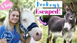 Download Vlog | Donkeys Escaped! Tack Room Cleaning + Mickey Walks | This Esme Video