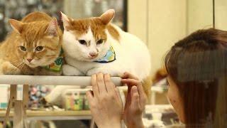 Download プロにお願いした猫どものシャンプーふたたび with 犬のライヤ姉さん Video