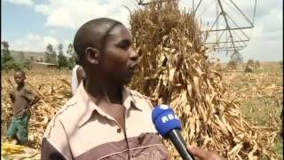 Download IRRIGATION INCREASED AGRICULTURE PRODUCTION FOR FARMERS IN RWANDA Video